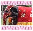 Elephant decked up for the procession