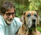 B-town Stars and Their Pets